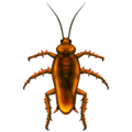 Cockroach, Cockroach emoji. Insects, New emojis 2020