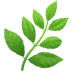 Herb emoji, Leaf emoji, Apple's Herb emoji, Herb emoji on Apple