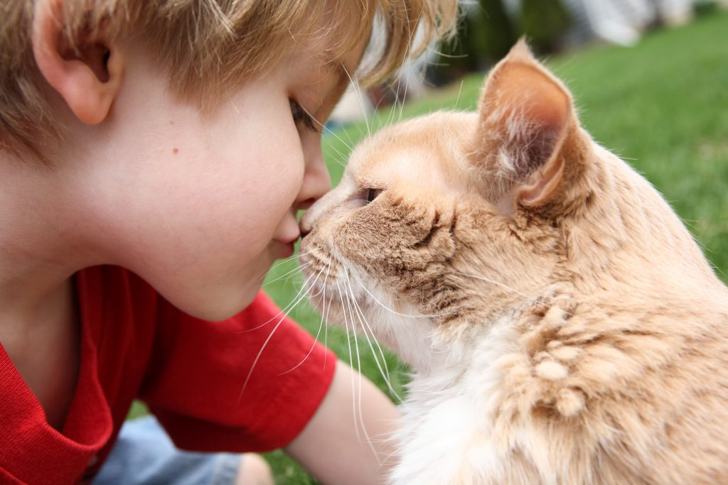 boy and cat showing affection