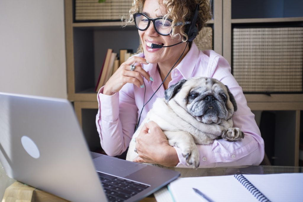 Home smart working people job business activity - cheerful young woman use zoom video call and laptop computer connection - marketing online class assistant and funny dog friendship together