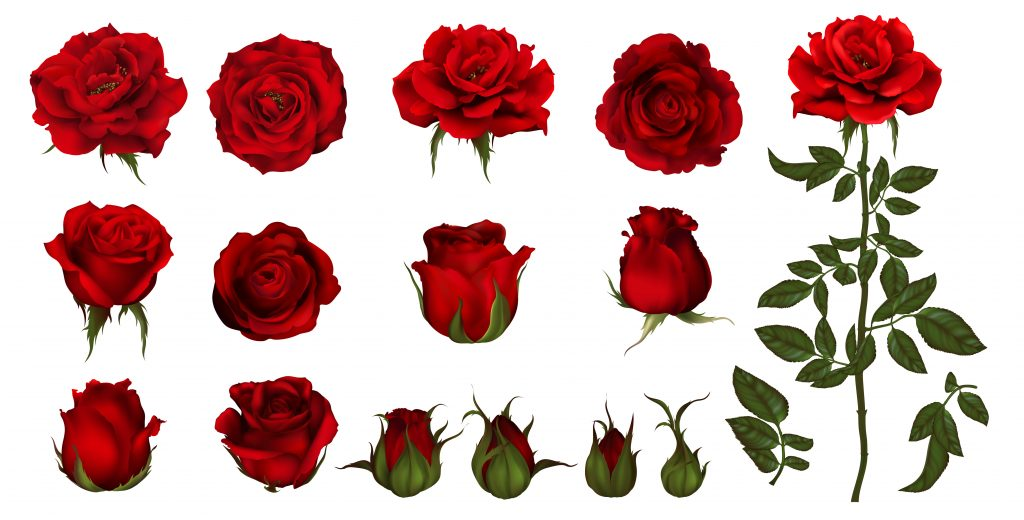 variations of roses