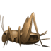 🦗 cricket Emoji on Apple Platform