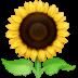 🌻 Tournesol Emoji sur la plateforme Facebook