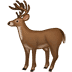 🦌 deer Emoji on Samsung Platform