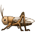 🦗 cricket Emoji on Samsung Platform