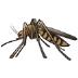 🦟 mosquito Emoji on Samsung Platform