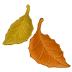 🍂 fallen leaf Emoji on Samsung Platform